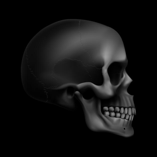 Crâne Humain Vecteur Premium