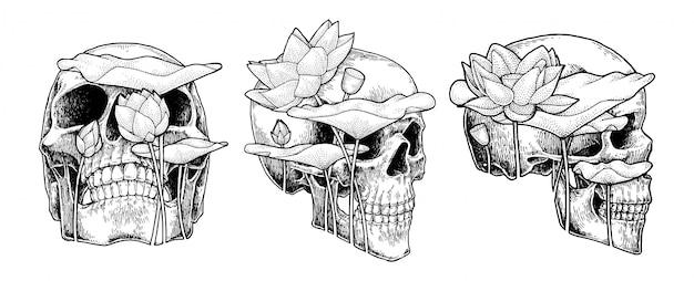 Crâne et lotus, illustration abstraite dessinée à la main Vecteur Premium