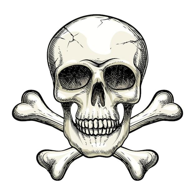 Crâne De Vecteur Et Os Croisés Vecteur gratuit
