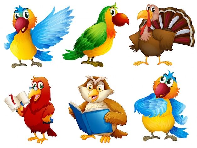 Créatures en plumes colorées Vecteur gratuit
