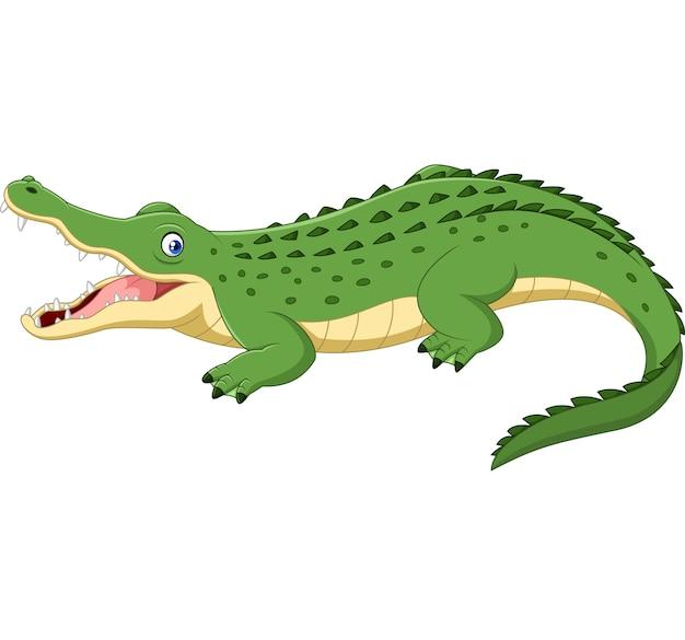 Crocodile De Dessin Animé Isolé Sur Fond Blanc Vecteur Premium
