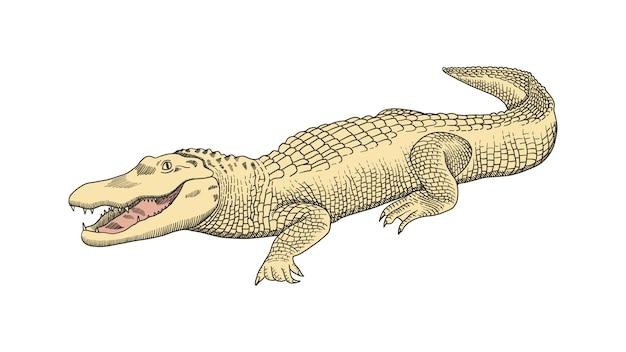 Crocodile Vecteur Premium