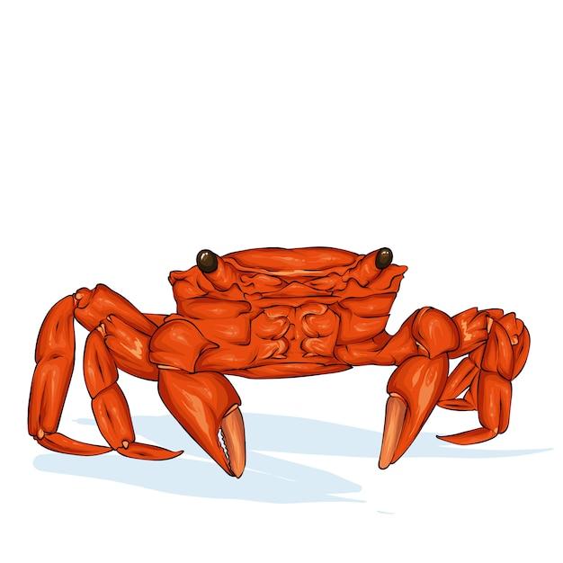 Croquis De Crabe Avec Vecteur De Lunettes De Soleil. Illustration De Fruits De Mer Dessinés à La Main. Idéal Pour Le Menu, L'affiche Ou L'étiquette. Vecteur Premium