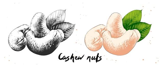 Croquis dessiné à la main de noix de cajou Vecteur Premium