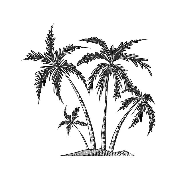 Croquis dessiné main de palmiers en monochrome Vecteur Premium