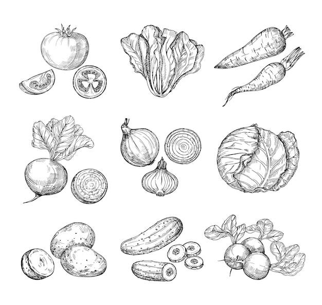 Croquis De Légumes. Concombre Tomate Fraîche Et Pommes De Terre Carottes. Radis Et Chou Oignons Dessinés à La Main. Ensemble De Légumes De Jardin Vecteur Premium
