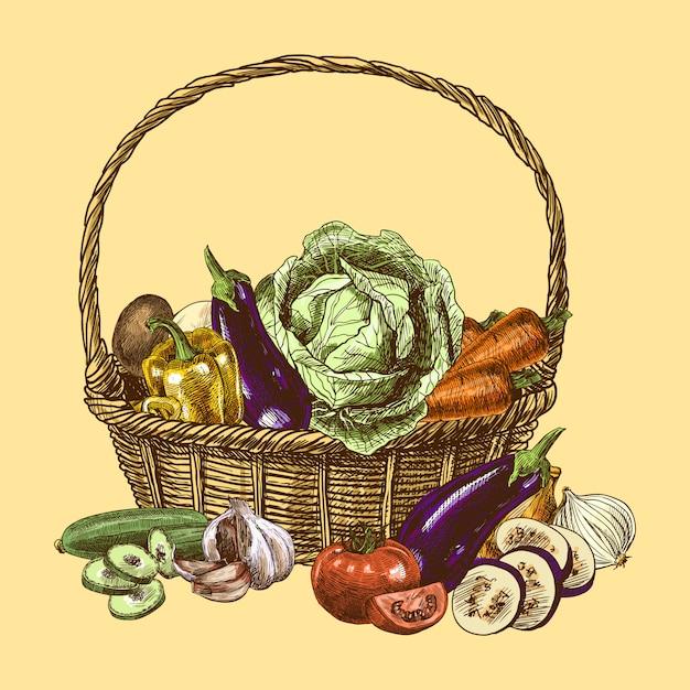 Croquis de légumes couleur Vecteur gratuit