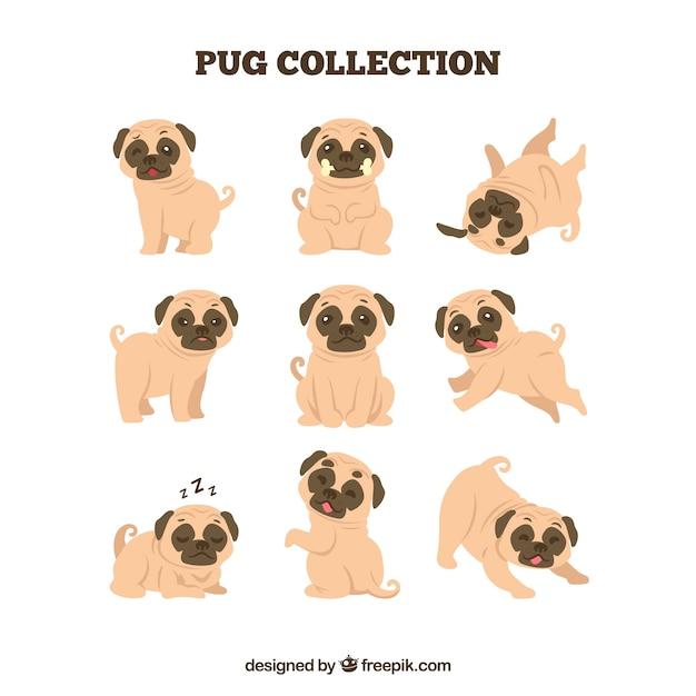 Cute pugs avec design plat Vecteur gratuit