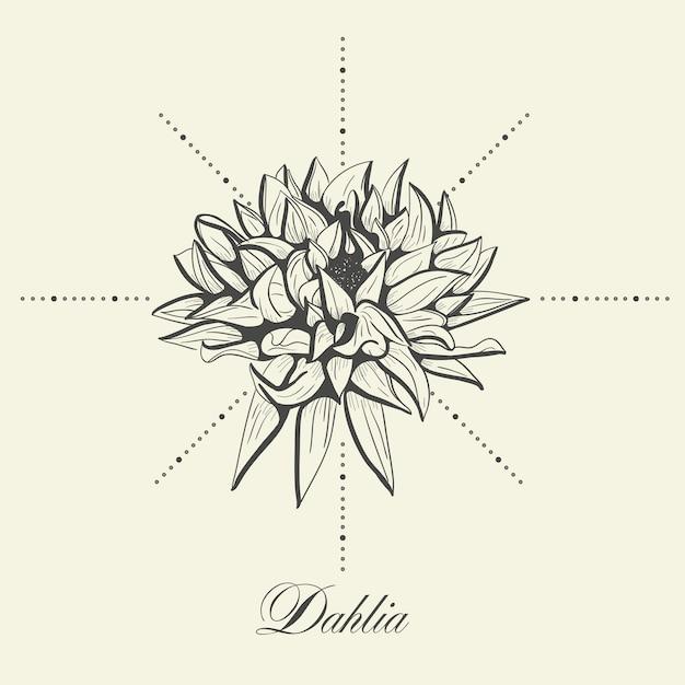 Dahlia Vecteur Premium