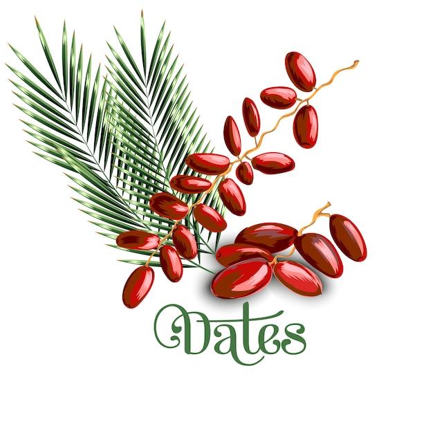Dattes aux feuilles d'olivier Vecteur Premium