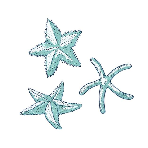 Définir Des étoiles De Mer. Trois Types D'étoile De Mer Contour Monochrome Esquisse Illustration De Logos De Cartes Touristiques Sur Le Thème Marin. Vecteur Premium