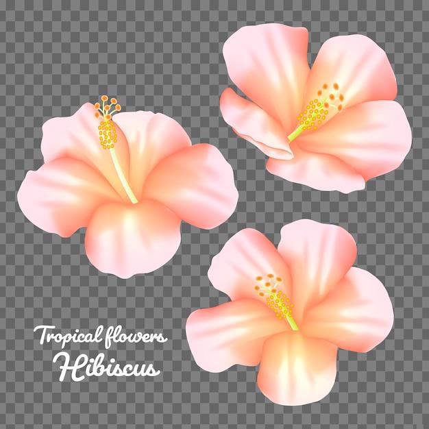Définir le vecteur de fleur d'hibiscus Vecteur Premium