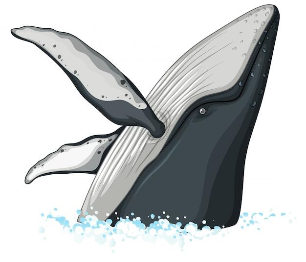 Demi Corps De Baleine A Bosse Vecteur Gratuite