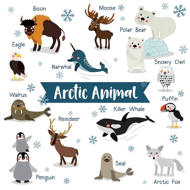 Dessin Anime Animal Arctique Avec Des Noms D Animaux Vecteur Premium