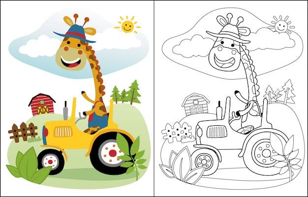 Dessin animé drôle de girafe sur tracteur Vecteur Premium