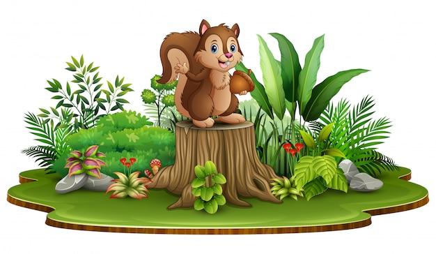 Dessin animé écureuil heureux tenant une pomme de pin et debout sur une souche d'arbre avec des plantes vertes Vecteur Premium