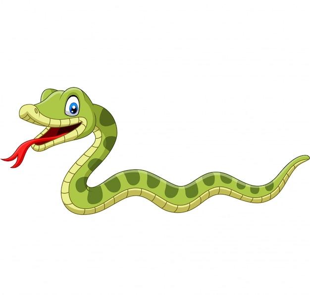 Dessin animé mignon serpent vert isolé Vecteur Premium