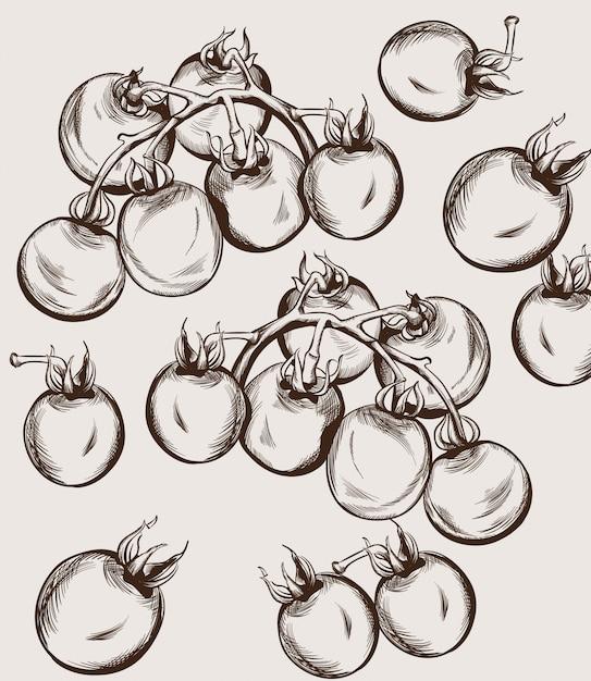 Dessin au trait tomates cerises. illustrations de la récolte d'automne Vecteur Premium
