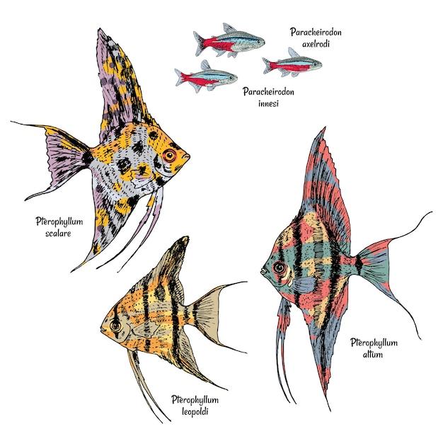 Dessin Coloré De Poissons D'aquarium Sertis De Néon Et De Poissons-anges De Différents Types Vecteur gratuit
