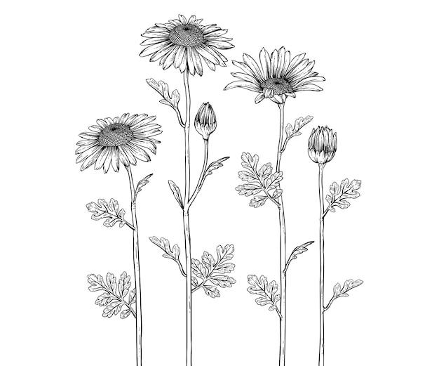 Dessin De Fleurs De Marguerite Vecteur Premium