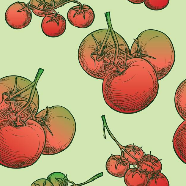 Dessin à La Main Croquis De Tomates Vectorielle Continue Vecteur Premium