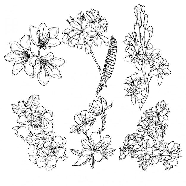 Dessin à la main de fleurs et croquis noir et blanc Vecteur Premium