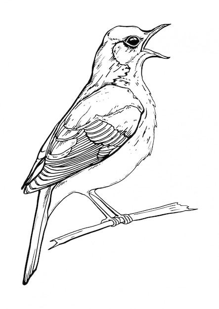Dessin noir et blanc d'un oiseau qui chante Vecteur Premium