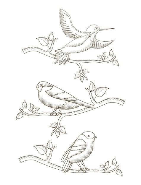 Dessin Des Oiseaux Dans La Branche Decoration Naturelle De L Arbre