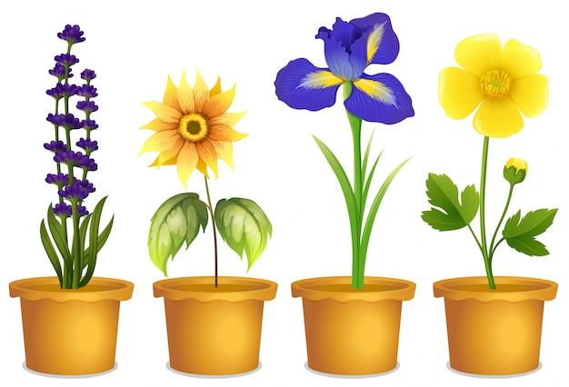 Dessin Plante Clipart Fleur Chemin Télécharger Des