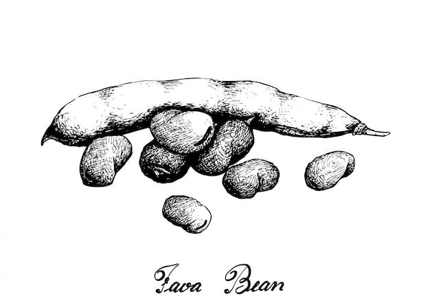 Dessiné à la main de fève verte fraîche Vecteur Premium