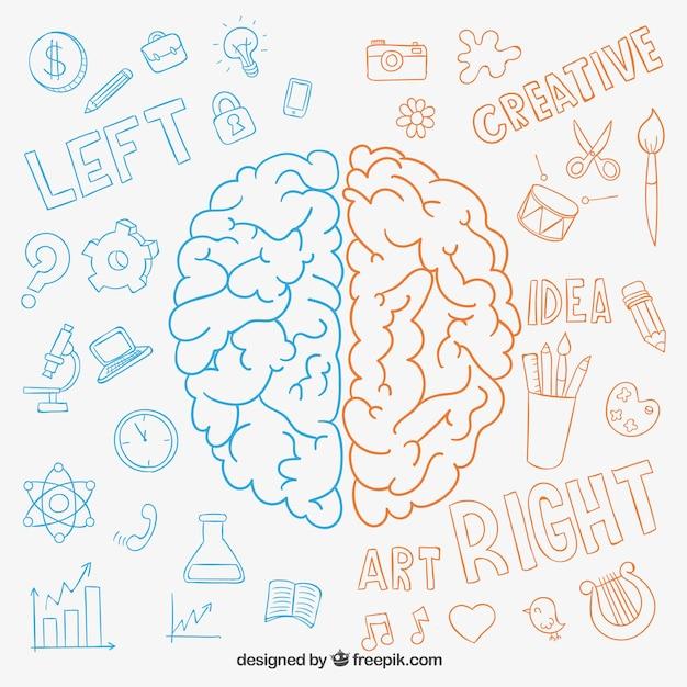Dessinés à la main hémisphères du cerveau Vecteur gratuit
