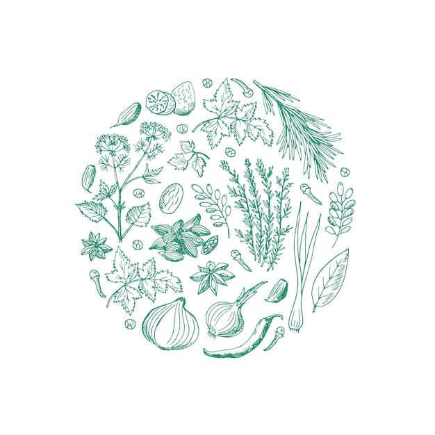 Dessinés à la main des herbes et des épices en forme de cercle Vecteur Premium