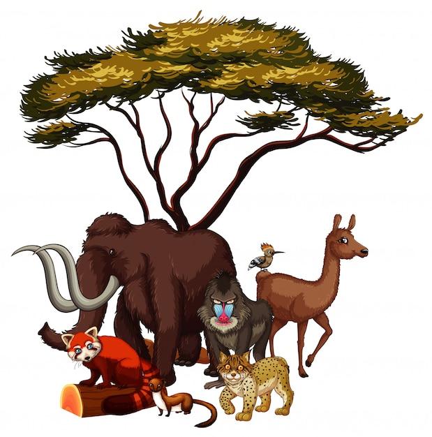 Dessinés à La Main Isolés D'animaux Africains Vecteur gratuit