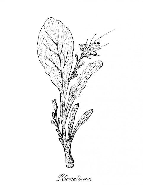 Dessinés à la main des plantes de komatsuna sur fond blanc Vecteur Premium