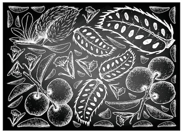 Dessinés à la main de tallow prune et corossol sur tableau noir Vecteur Premium