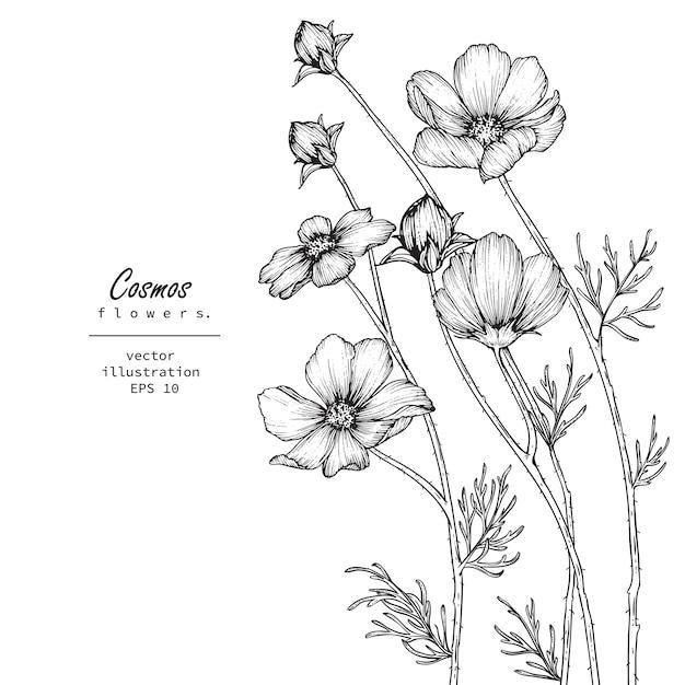 Dessins de fleurs de cosmos Vecteur Premium