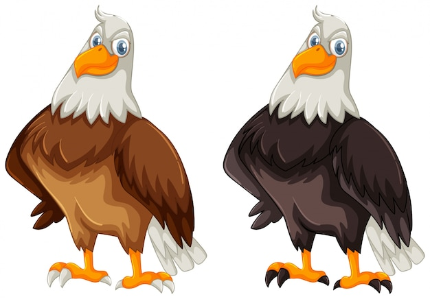 Deux aigles avec plume brune et noire Vecteur gratuit