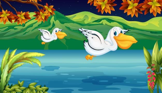 Deux animaux volants à la rivière Vecteur gratuit