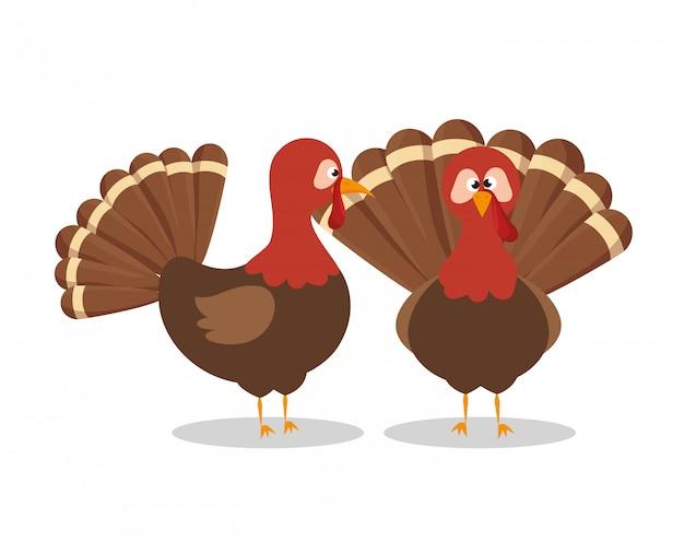 Deux, Dinde, Animal, Thanksgiving Vecteur gratuit