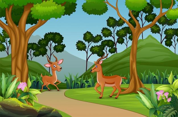 Deux gazelles mignonnes jouant dans la jungle Vecteur Premium