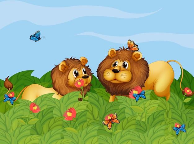 Deux lions dans le jardin avec des papillons Vecteur gratuit
