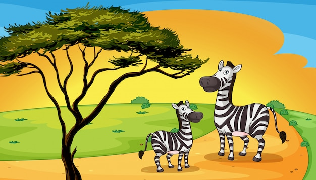 Deux zèbres sous l'arbre Vecteur gratuit