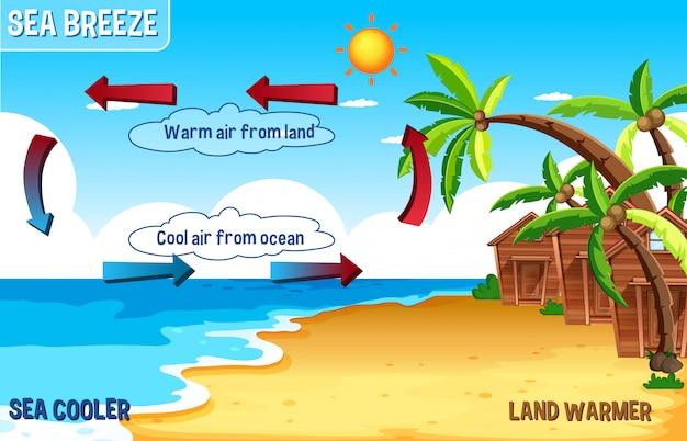 Diagramme de brise de mer avec terre et eau Vecteur gratuit