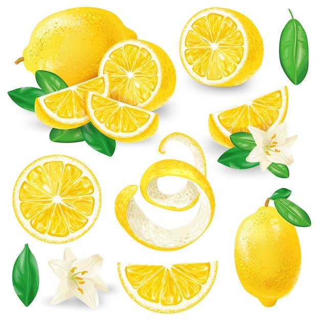Différents Citrons Avec Le Vecteur De Feuilles Et De Fleurs Vecteur gratuit