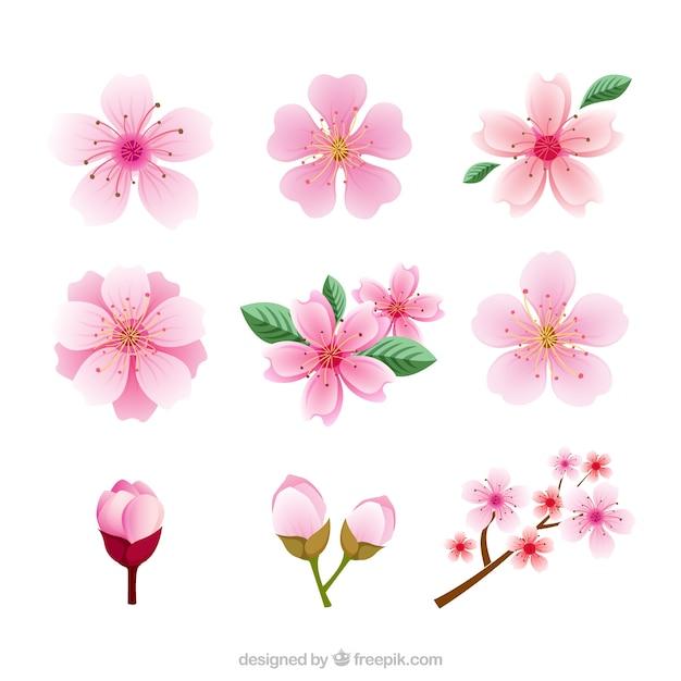 diff rents types de fleurs de cerisier t l charger des. Black Bedroom Furniture Sets. Home Design Ideas
