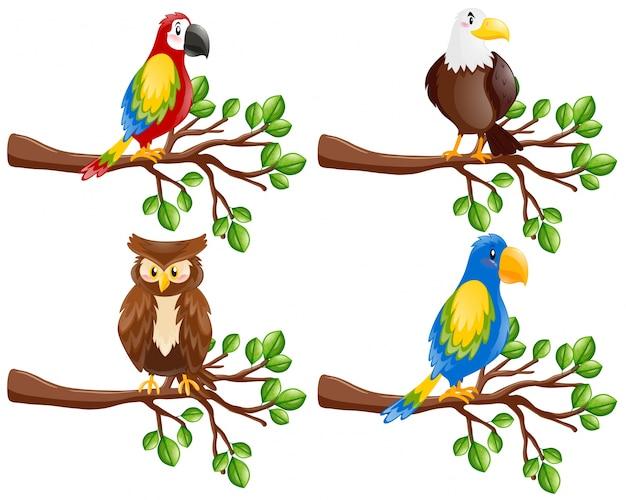 Différents types d'oiseaux sur la branche Vecteur gratuit