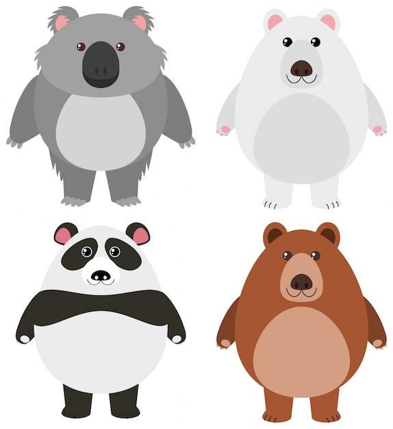 Différents types d'ours sur fond blanc Vecteur Premium