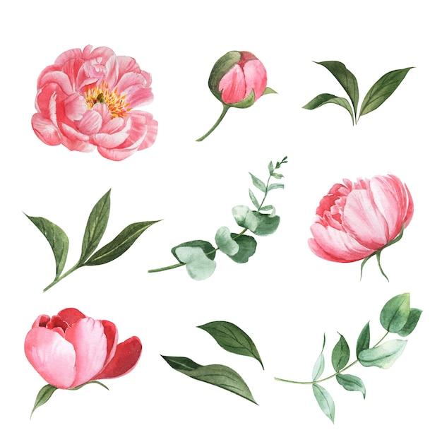 Divers éléments de design aquarelle de fleurs Vecteur gratuit
