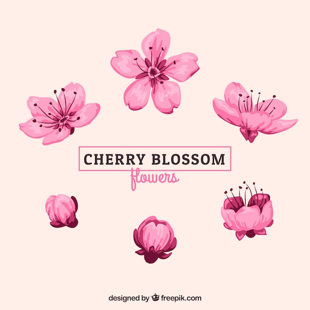 Diverses Fleurs De Cerisier Aquarelle Vecteur gratuit