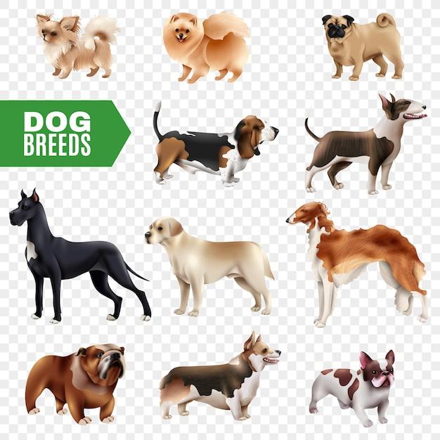 Dog breeds transparent icon set Vecteur gratuit